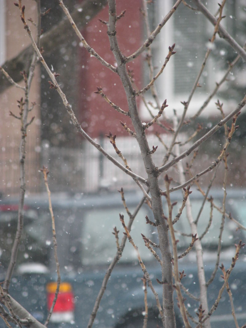 March snow 071