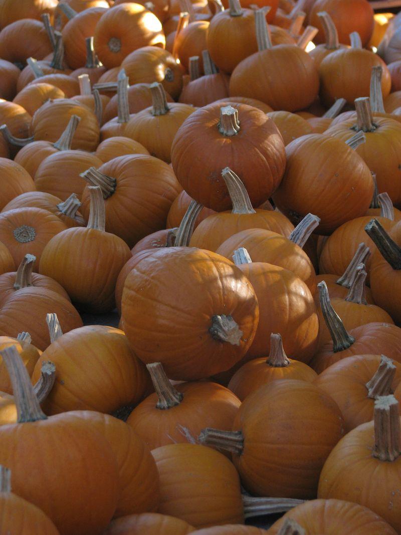 Arboretum October 2010 048