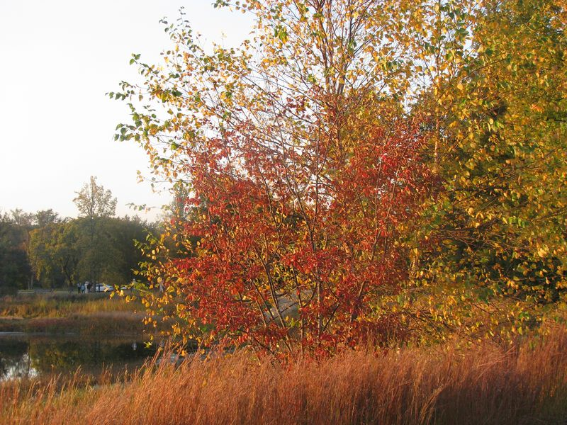 Arboretum October 2010 144
