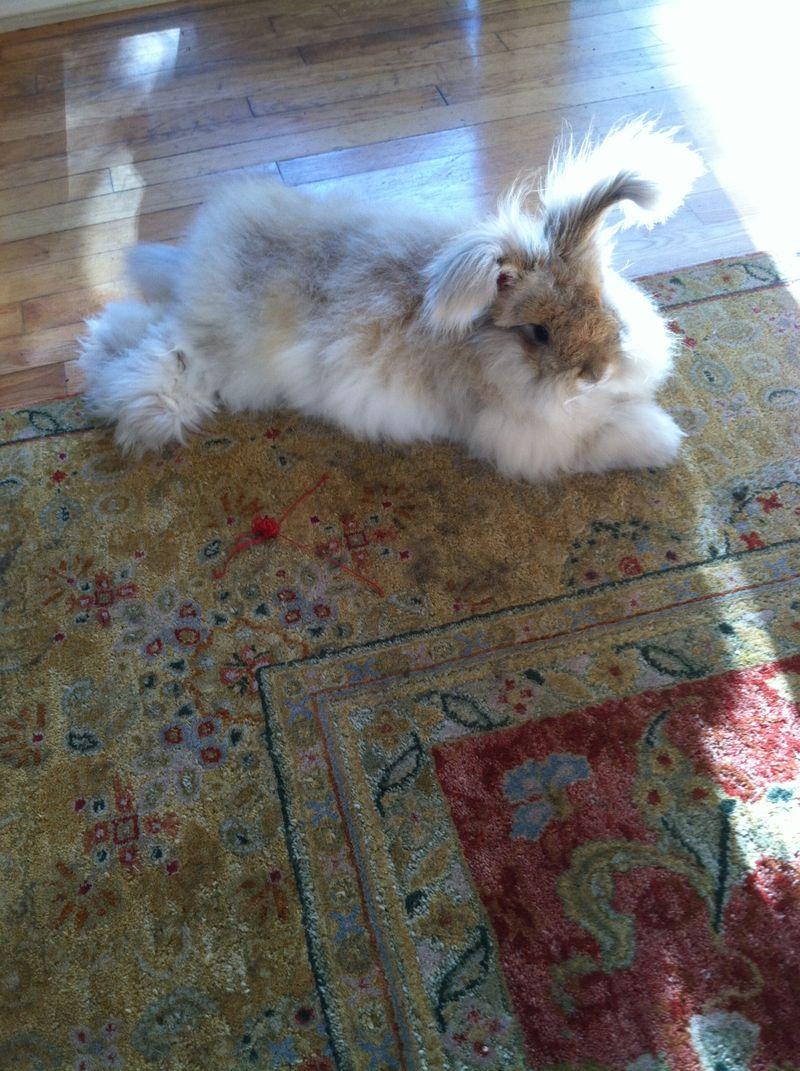 Bunny 013