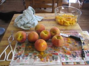 Apricot_picking_019