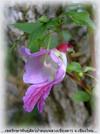 Parrot_flower2